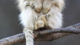 Cute Baby Finger Monkeys 7 550×300