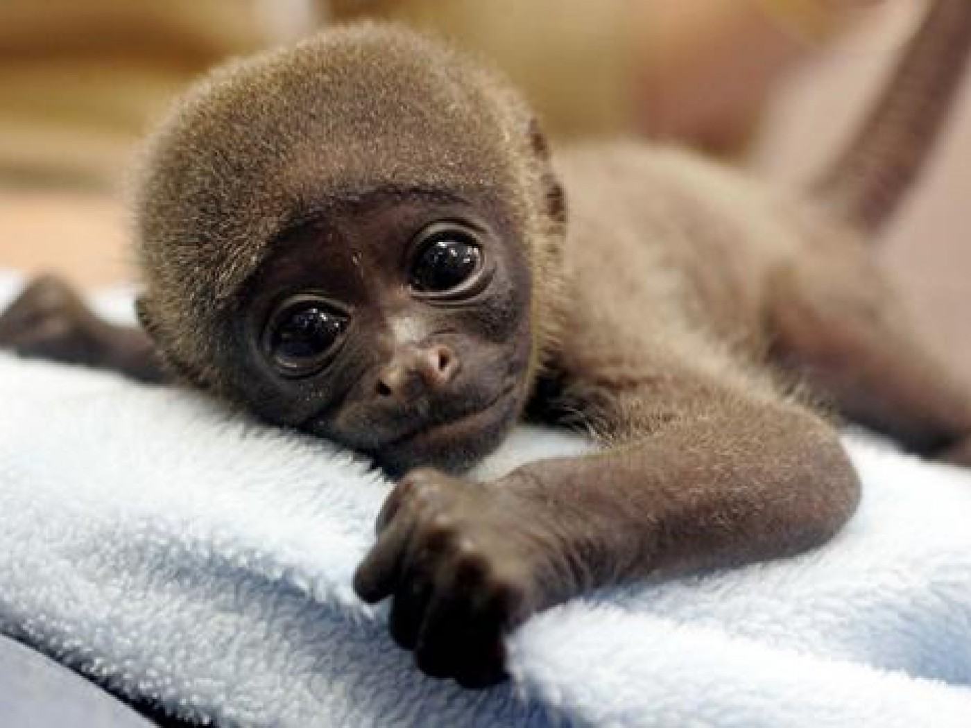 images of cute baby monkeys - photo #1