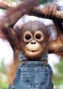 Cute Monkeys 1 211×300