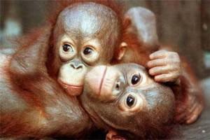 Cute Monkeys 4 300×200