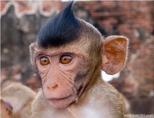 Funny Monkey 16 300×230