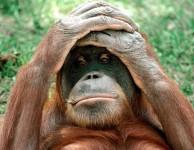 Funny Monkey 24 194×150