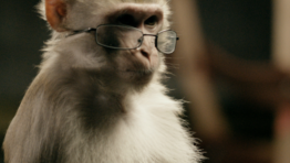Funny Monkeys With Glasses 1 767×450