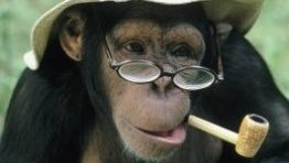 Funny Monkeys With Glasses 7 265×300