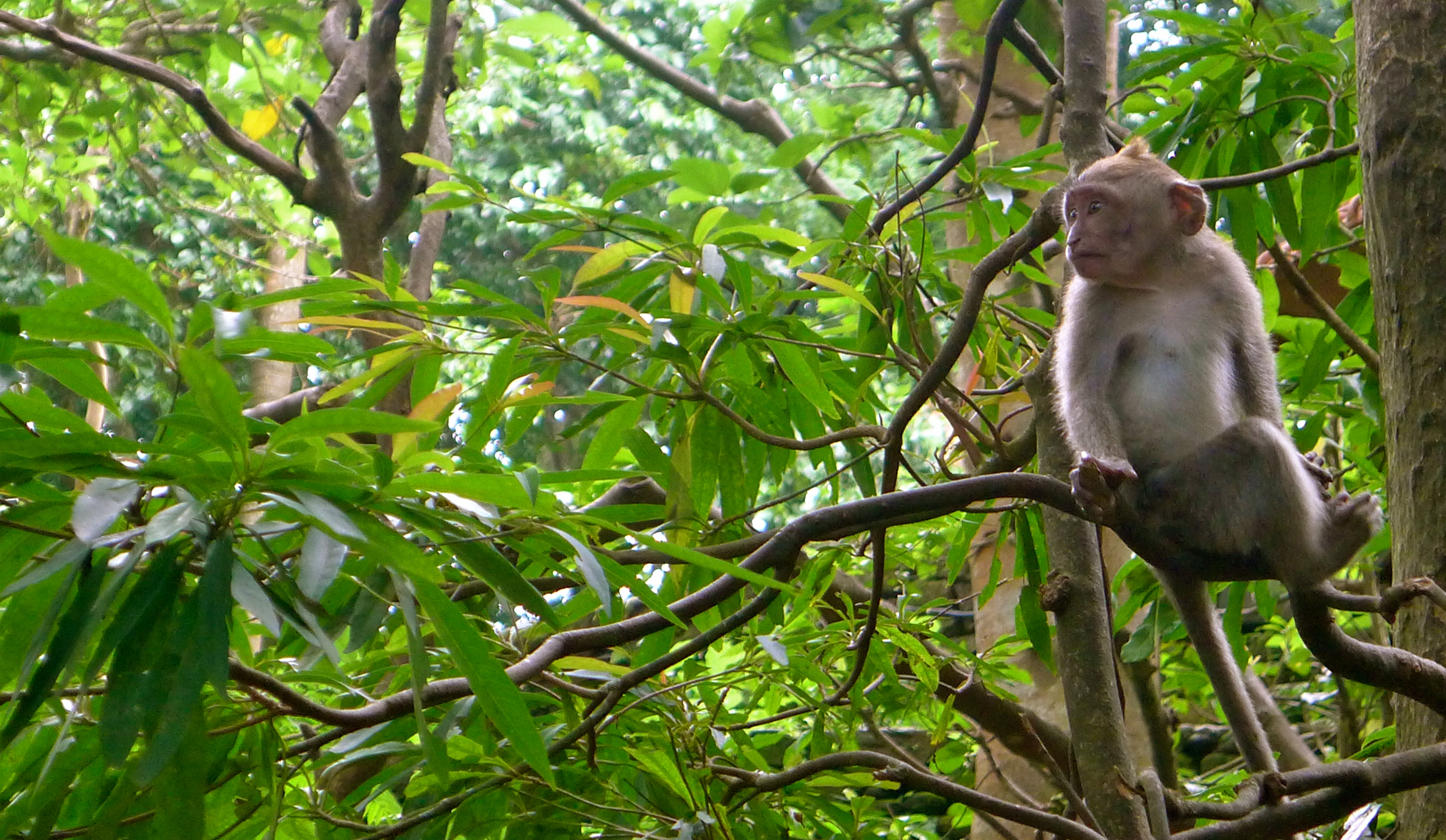 Pics photos funny jungle monkey tree pictures for