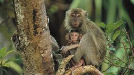 Monkey On Tree 41 300×199