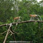 Monkey On Tree 47 150×150
