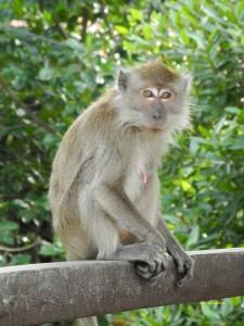 Monkey On Tree 8 225×300
