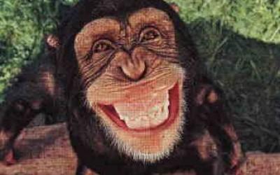 Monkey Wallpaper 47 400×250