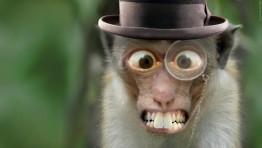 Monkey Wallpaper 48