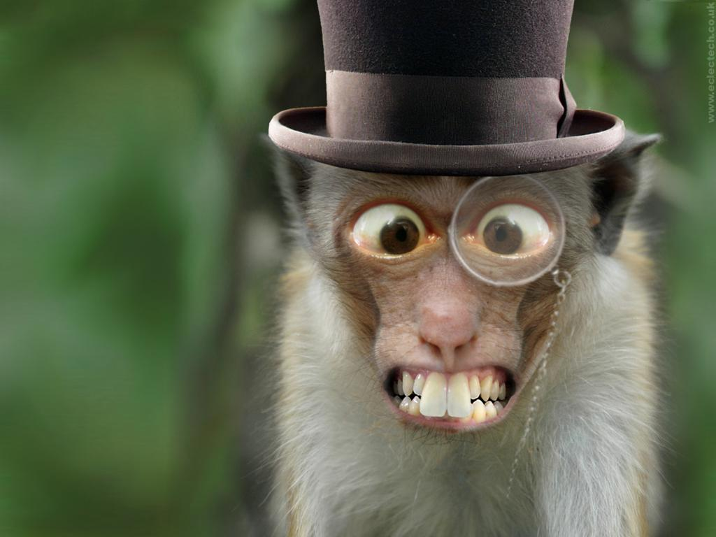 Monkey Wallpaper 48