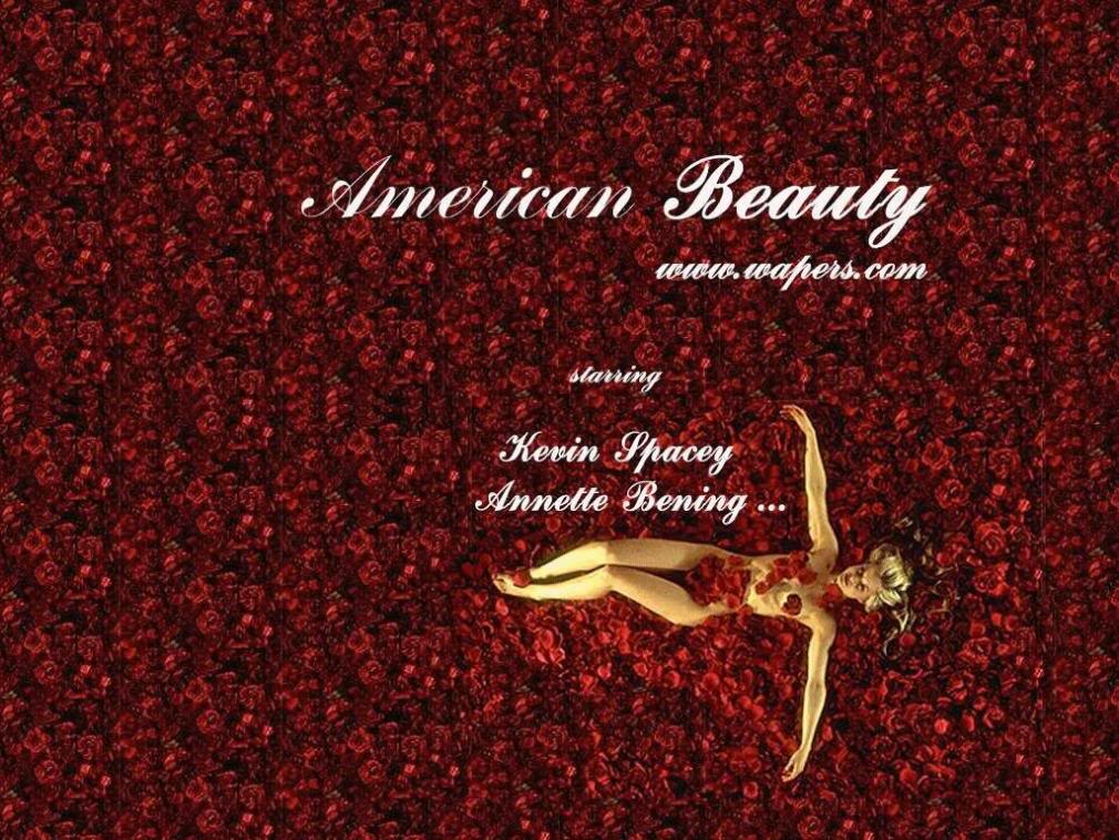 American Beauty Wallpaper   www.pixshark.com - Images ...