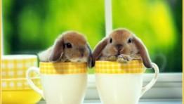 Baby Bunny 2 300×225