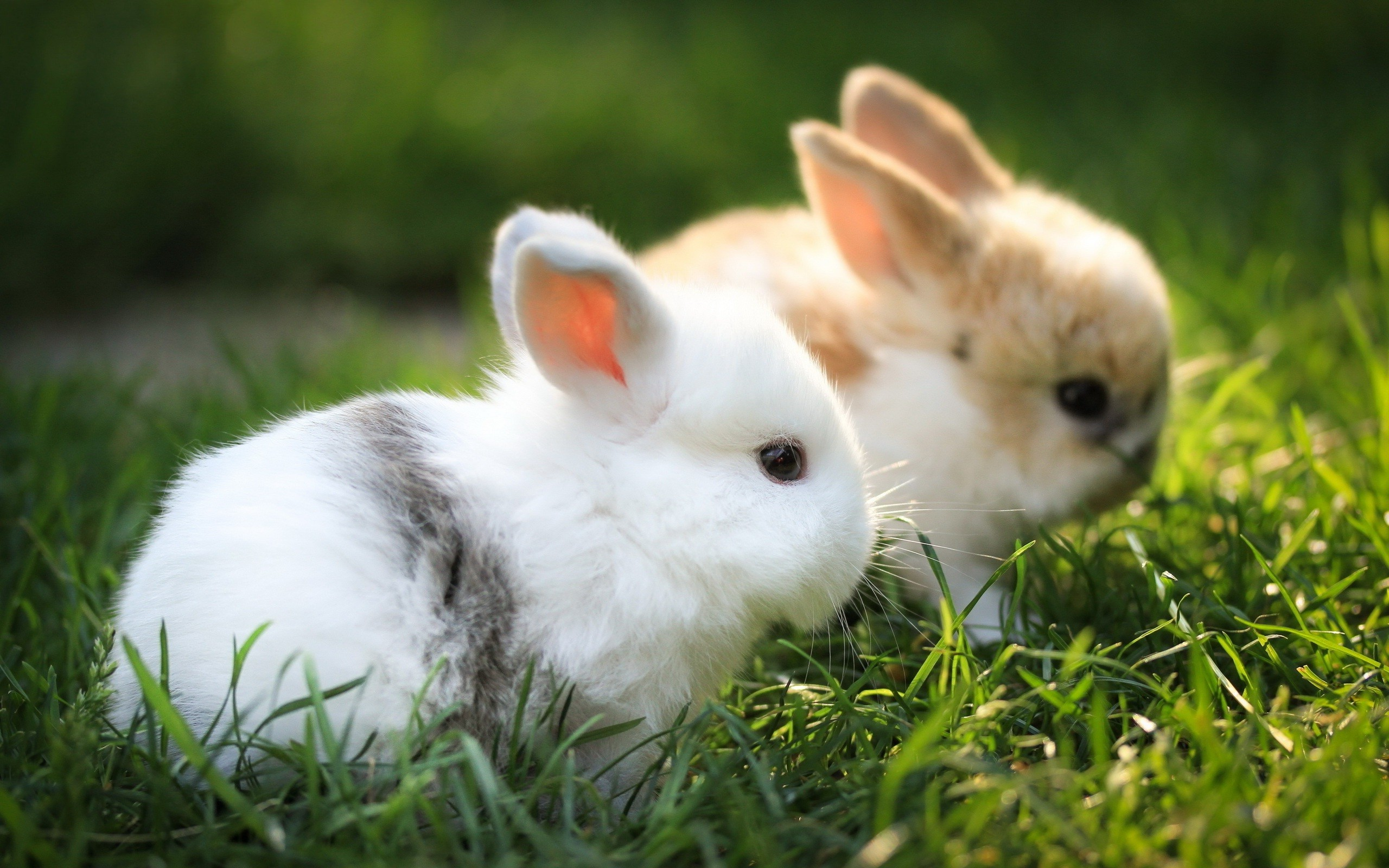 pics photos cute baby bunnies wallpaper pictures 3
