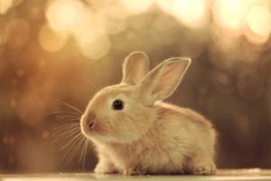 Baby Bunny 8 300×200