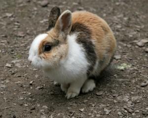 Bunny 26 300×240