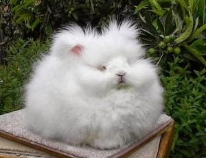 Bunny 6 300×231