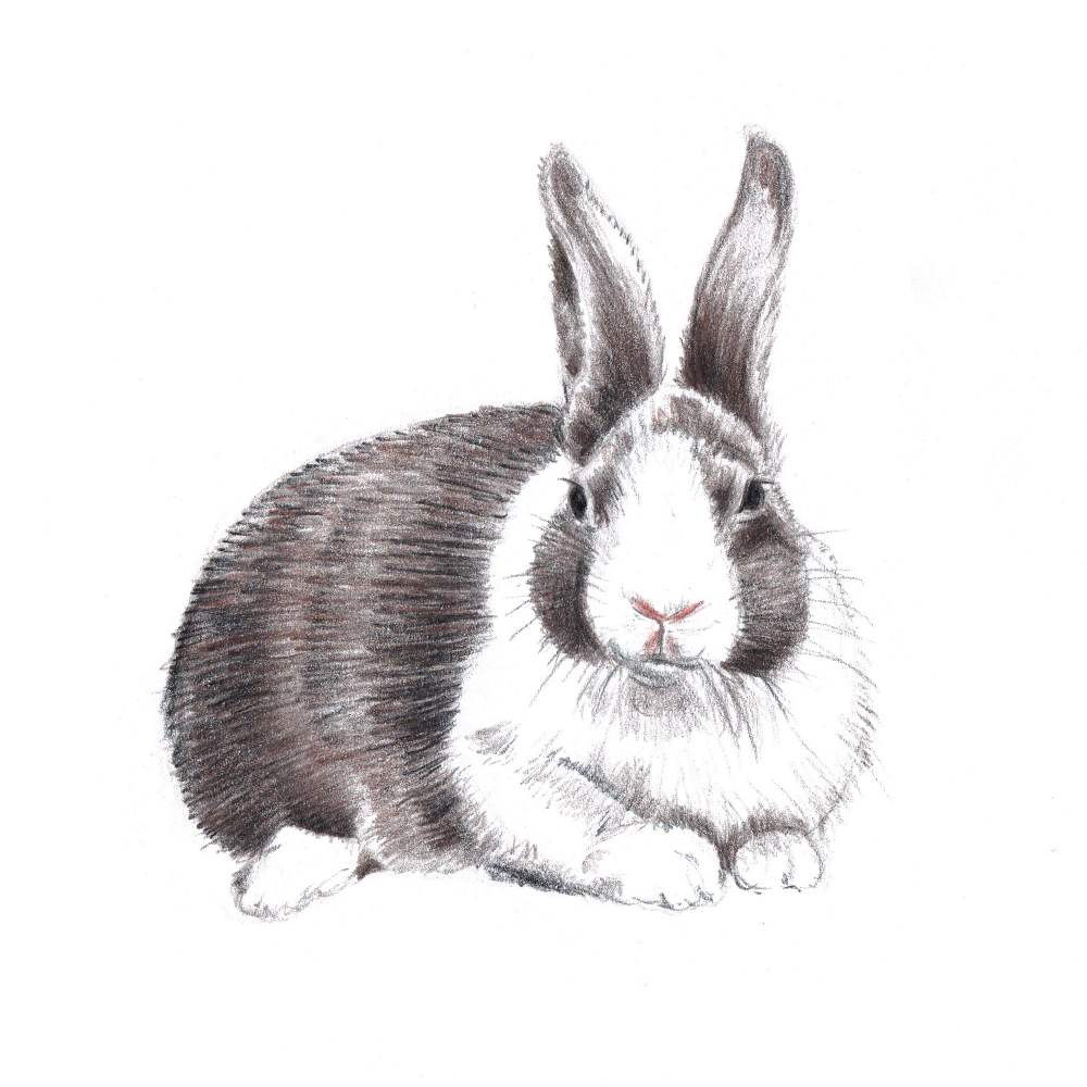 Bunny Drawing 31