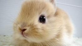 Cute Bunny 10