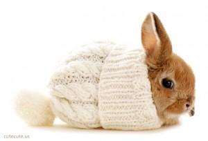Cute Bunny 2 300×204
