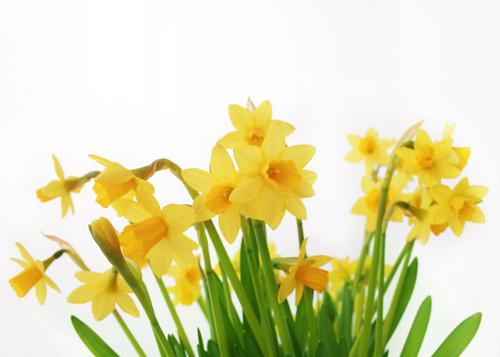 Easter Flowers 7