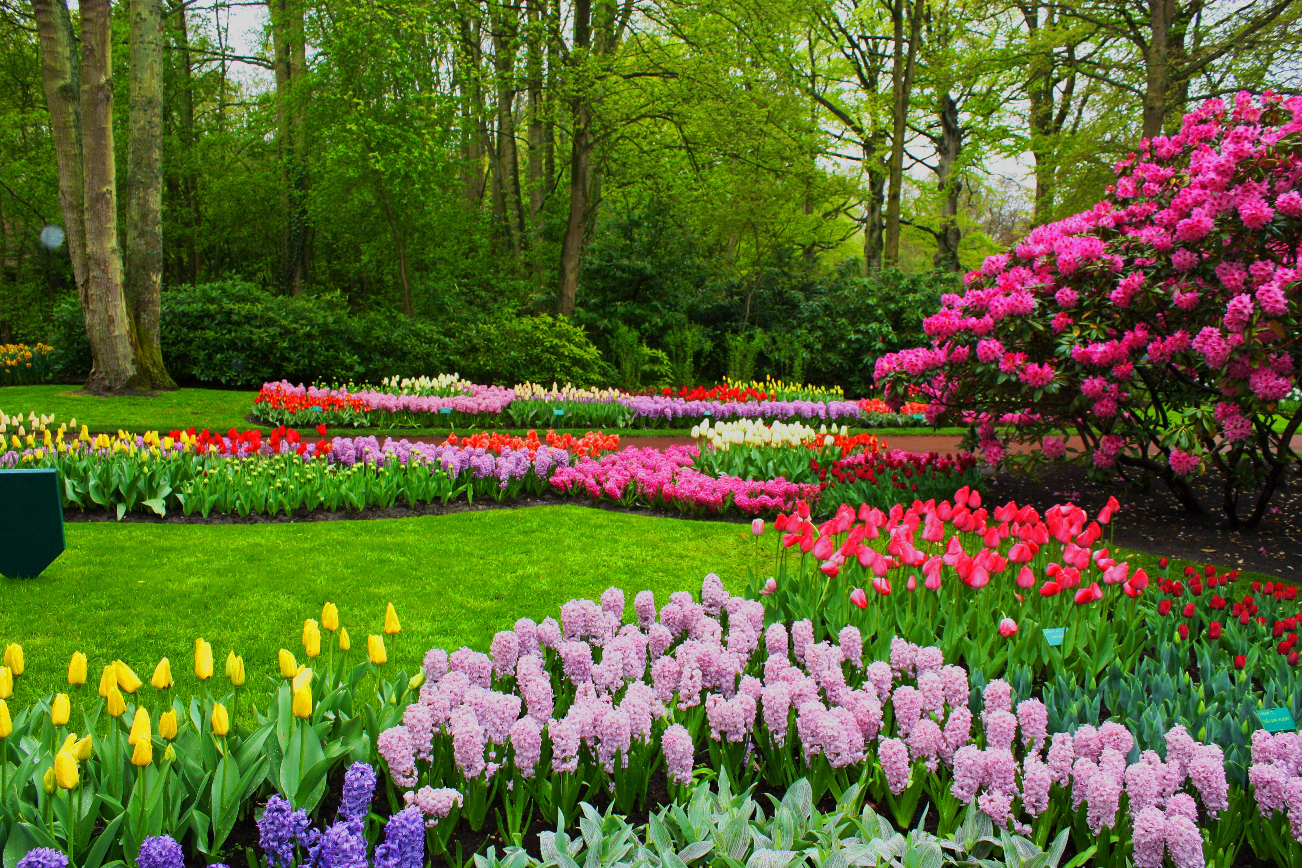 Spring Wallpapers & Pictures | The Art Mad Wallpapers