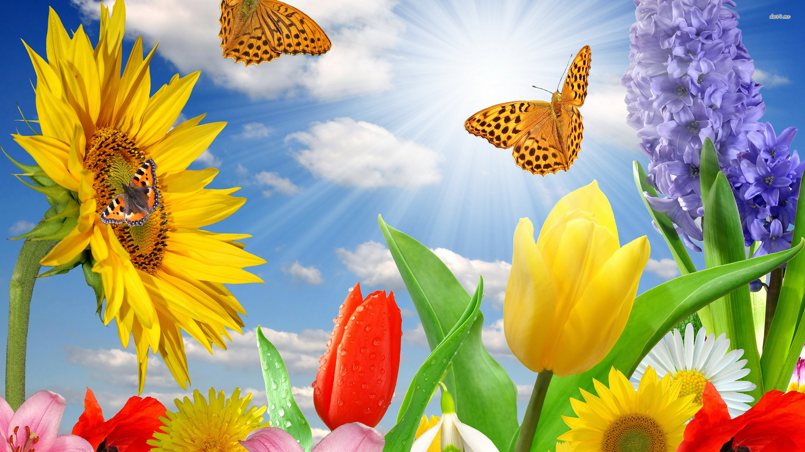 Top Wallpaper Butterfly Spring - Spring-Flowers-And-Butterflies-Wallpaper-1  Pictures_479484.jpg