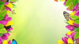 Spring Flowers And Butterflies Wallpaper 25
