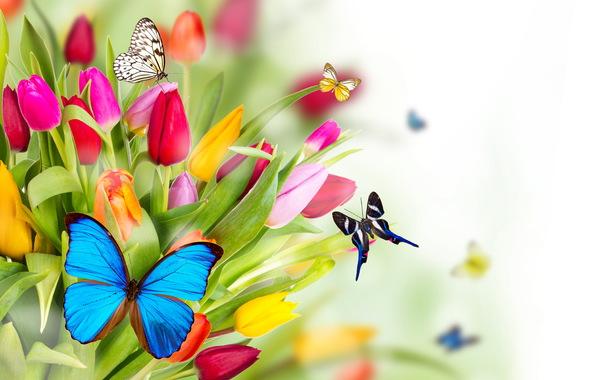 Обои для рабочего стола бесплатно весна цветы