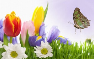 Spring Flowers And Butterflies Wallpaper 7 300×188