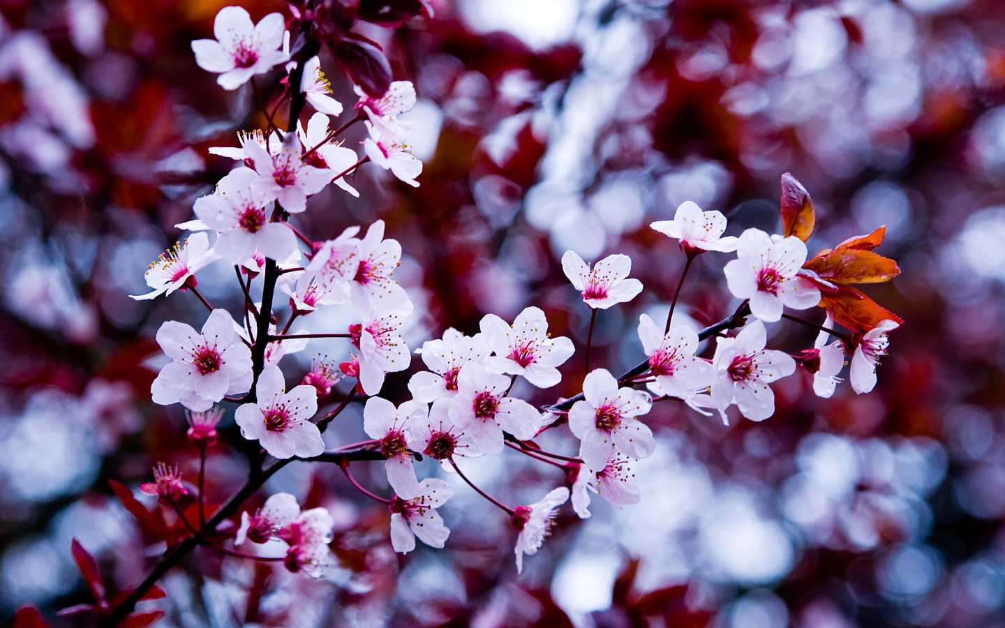 Early spring flowers wallpaper best background wallpaper funmozar spring flowers wallpapers mightylinksfo