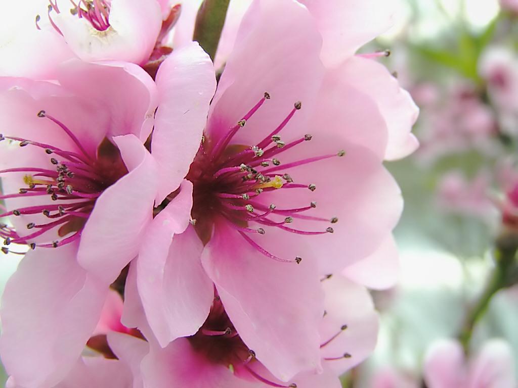 Early spring flowers wallpaper free best hd wallpapers funmozar spring flowers wallpapers mightylinksfo