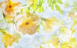 Spring Wallpaper 4 300×188