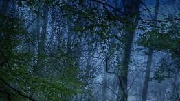 8935 dark forest iphone hd wallpaper_640x960