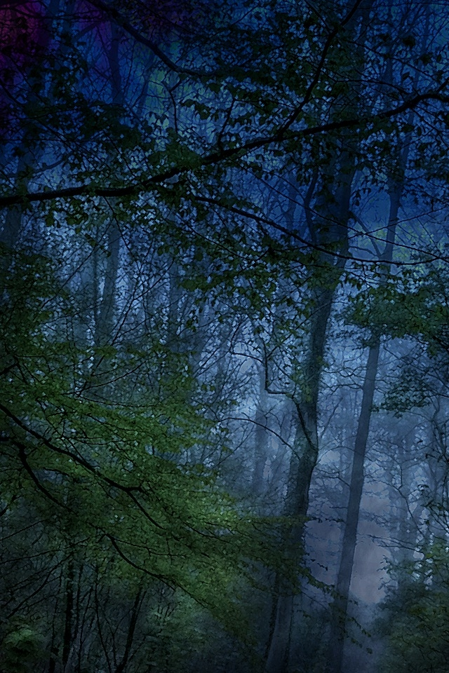 8935 dark forest iphone hd wallpaper_640x960