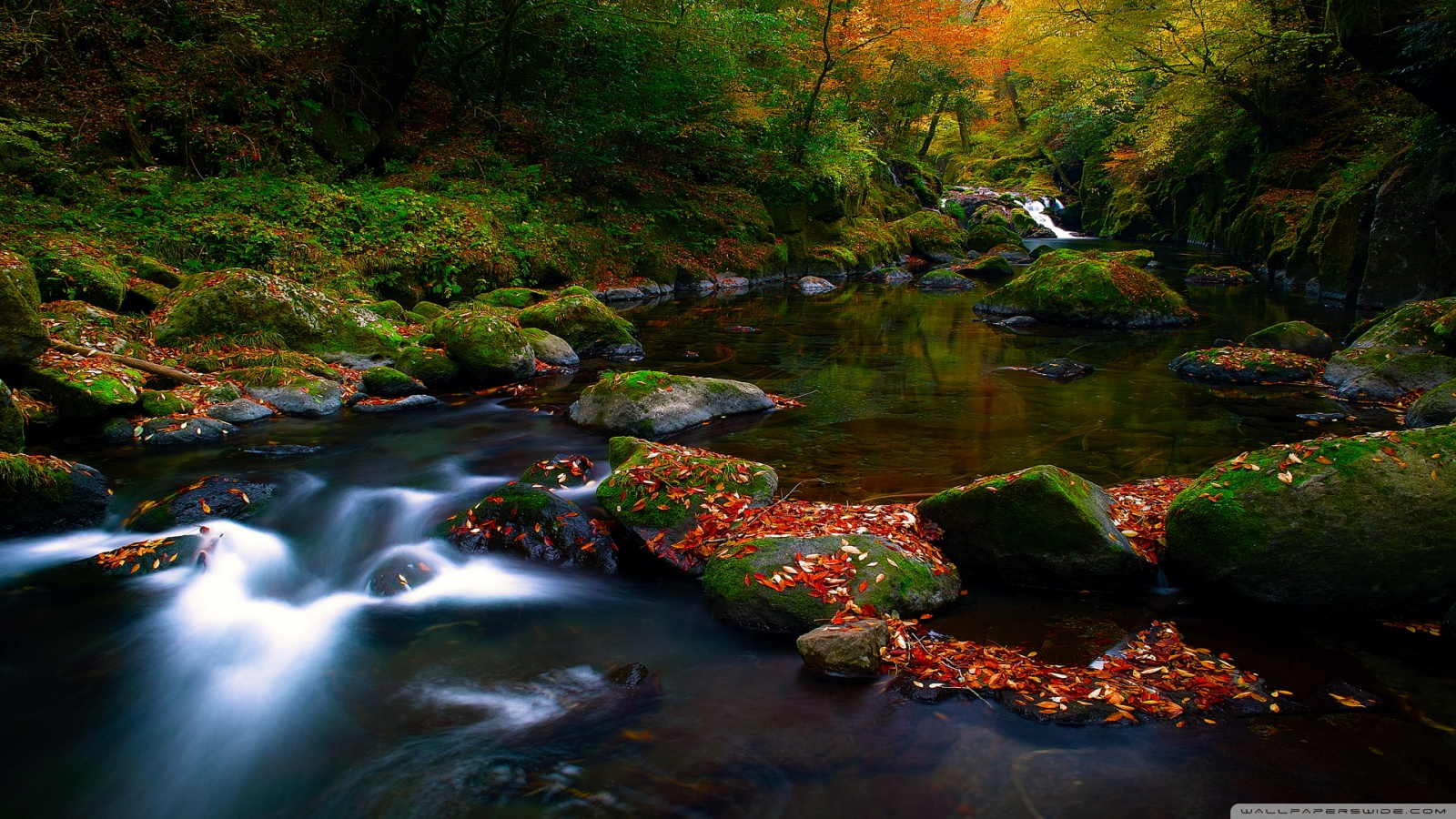 forest river wide hd - photo #25