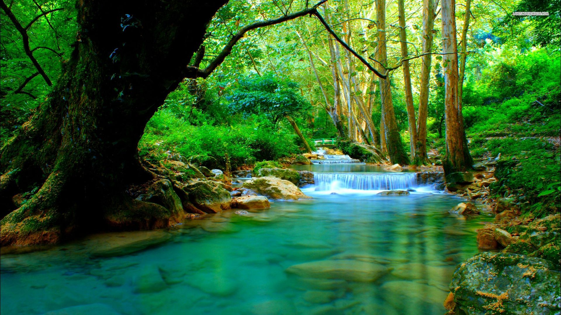 Beautiful Forest With River 2