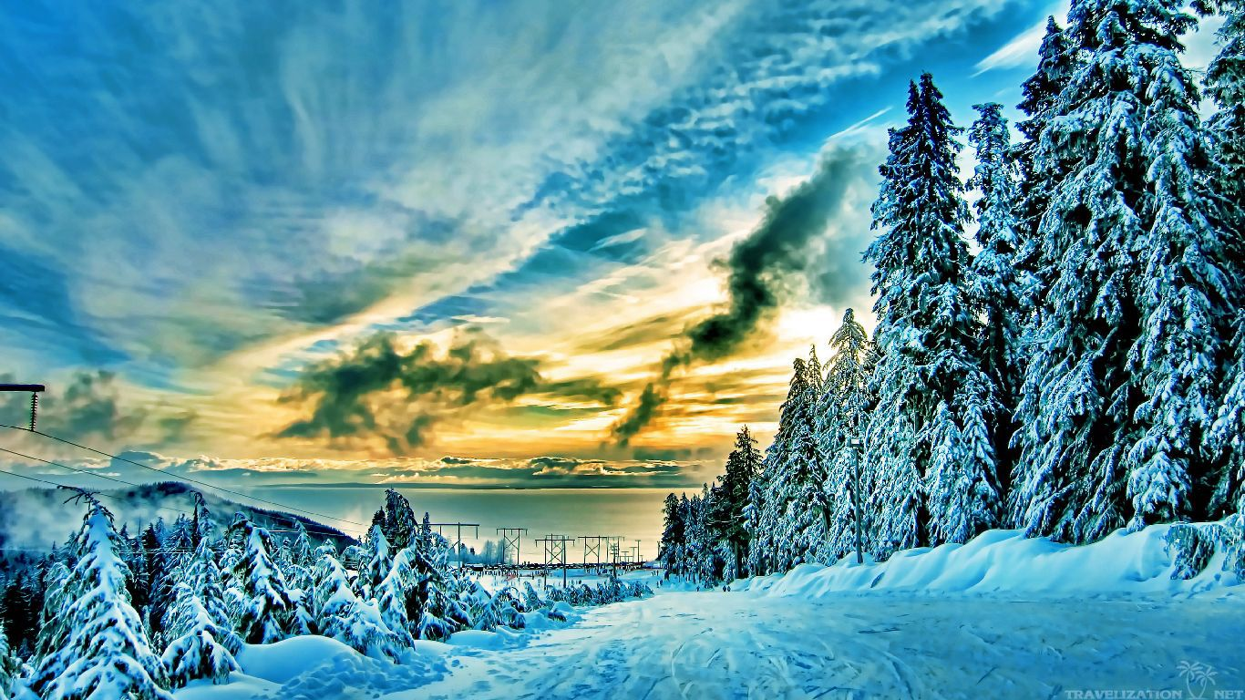 pics photos winter forest beautiful wallpapers