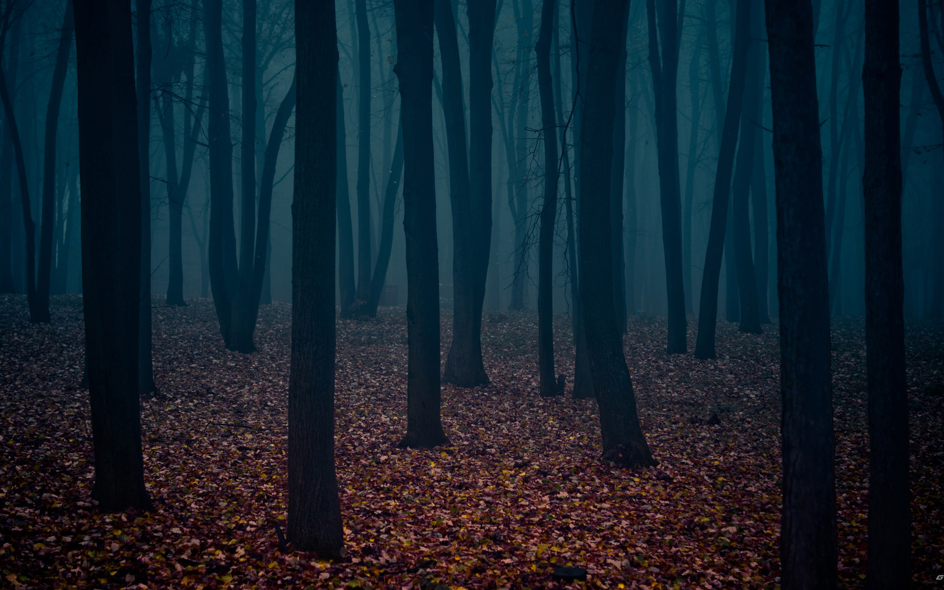 Dark Autumn Forest 3