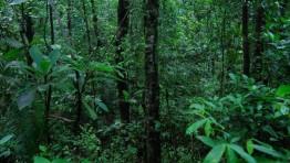 Dark Evergreen Forest 2 768×515