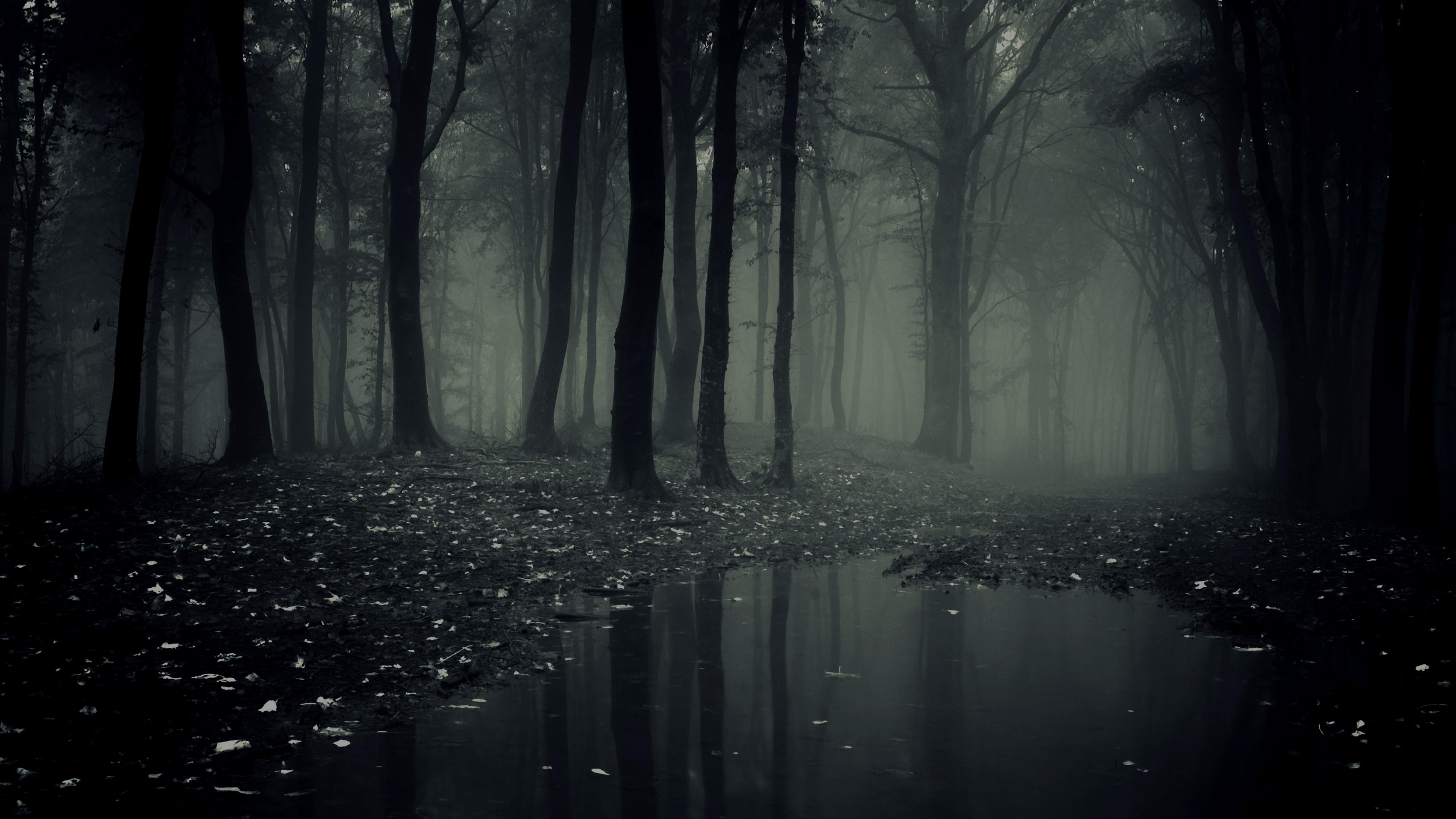 Dark Forest (11)