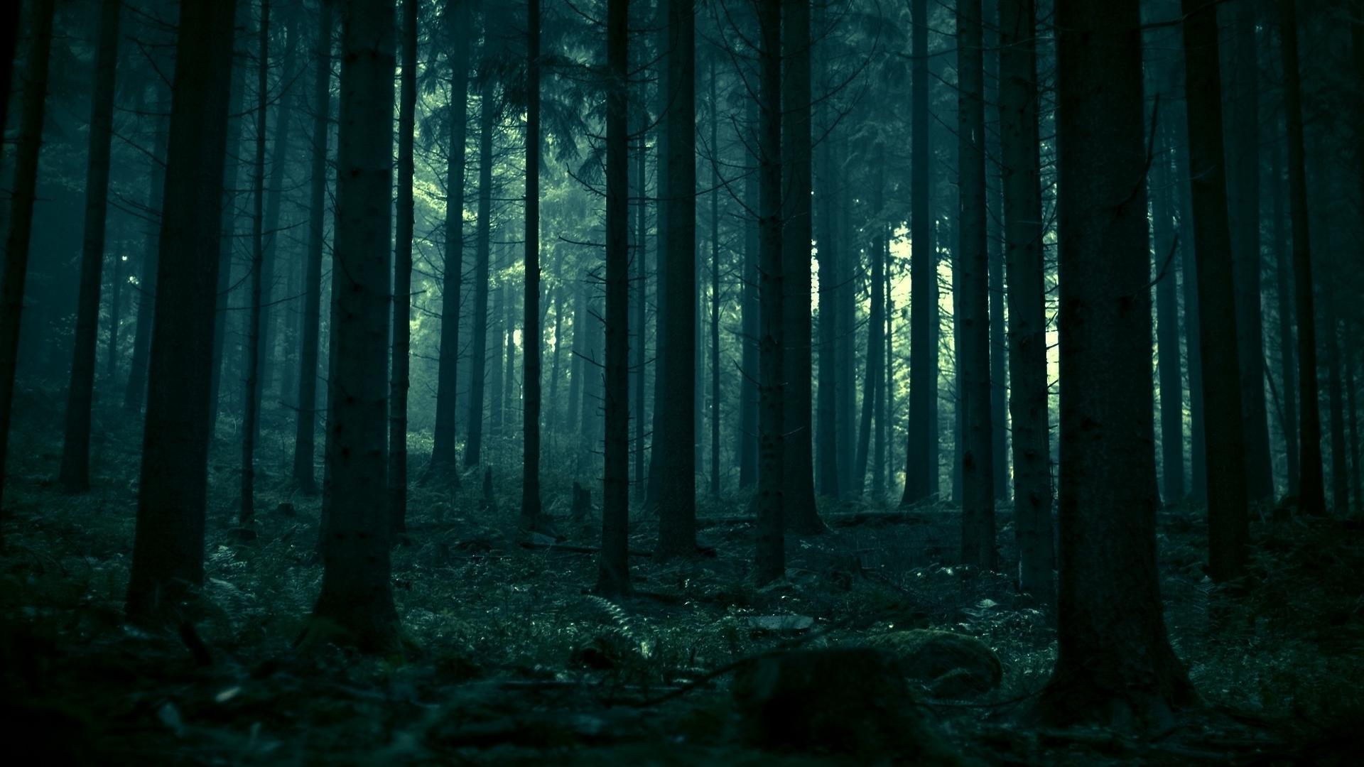 Dark Forest 19
