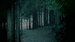 Dark Forest 23