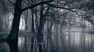 Dark Forest 26 300×169