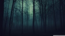 Dark Forest Hd Wallpapers 1080p 1 300×169