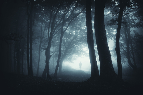 Dark Forest Path 2