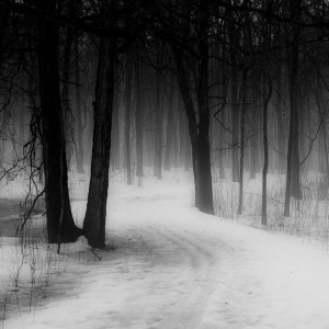Dark Forest Path Black And White 3 300×300