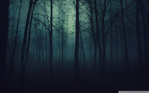 Dark Forest Wallpaper Widescreen 300×188