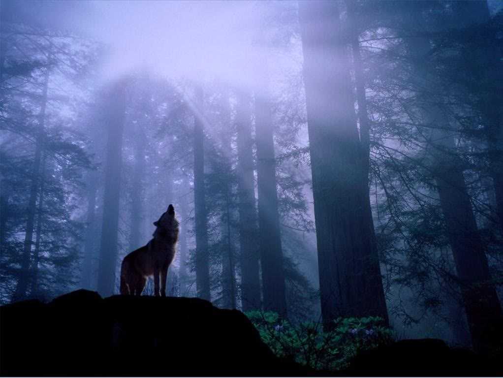 Wolf in Dark Forest