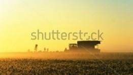 Early Morning Sunrise On The Farm 5 300×239 262×148